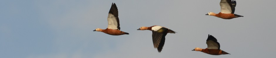 Lesvos Bird News