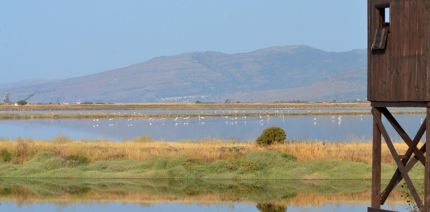 Kalloni Salt Pans north hide; Lesvos