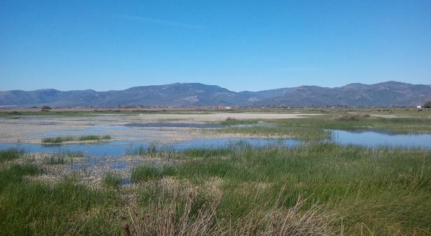 Kalloni Sal Pans fields; Lesvos